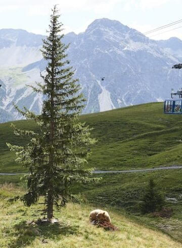 Machen Sie Ferien zuhause - zum Beispiel in Graubünden und gehen Sie ins Bärenland nach Davos.